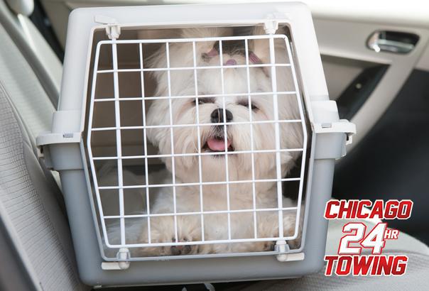 Dog Vehicle Safety Tips